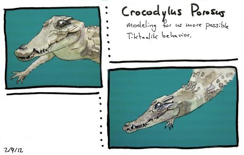 Croc_behavior