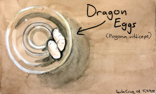 Dragon_eggs