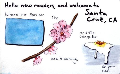 Seagull_intro