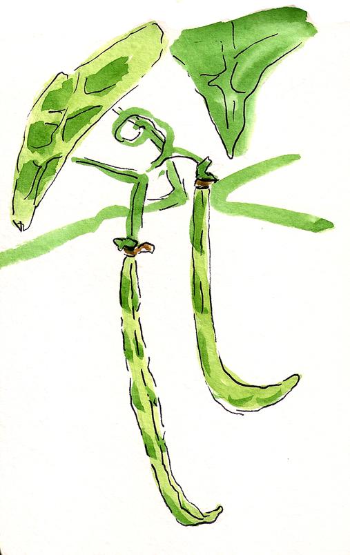 green bean 2