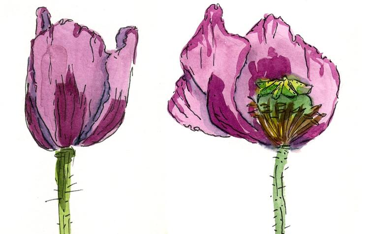 poppies panel2