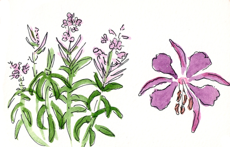 donner flowers 1