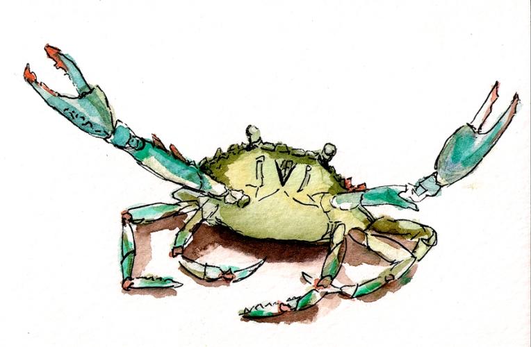md blue crab