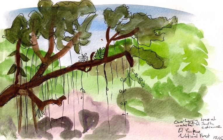 overhanging vines.jpg