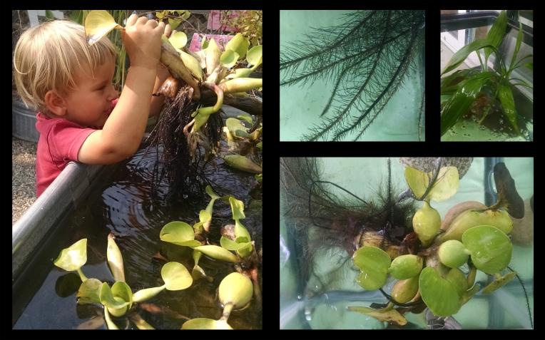 Aquatic Plants.jpg
