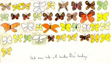 butterflies of El Yunque