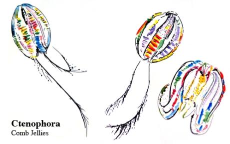 Ctenophora quilt designs
