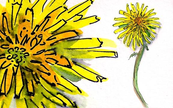 dandelion 11 copy