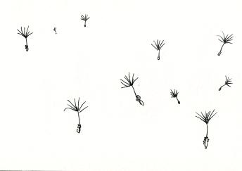 dandelion 14 copy