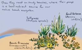 sand ecosystem