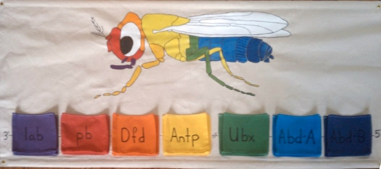 Drosophila Genetics Wall Hanging